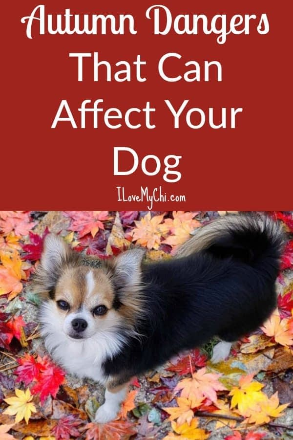 Autumn Dangers That Can Affect Your Dog