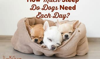 How Much Sleep Do Dogs Need Each Day