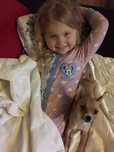 Child with Chihuahua