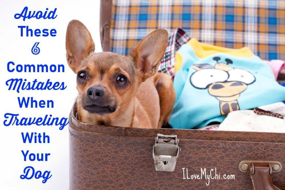 Avoid These 6 Common Mistakes When Traveling With Your Dog