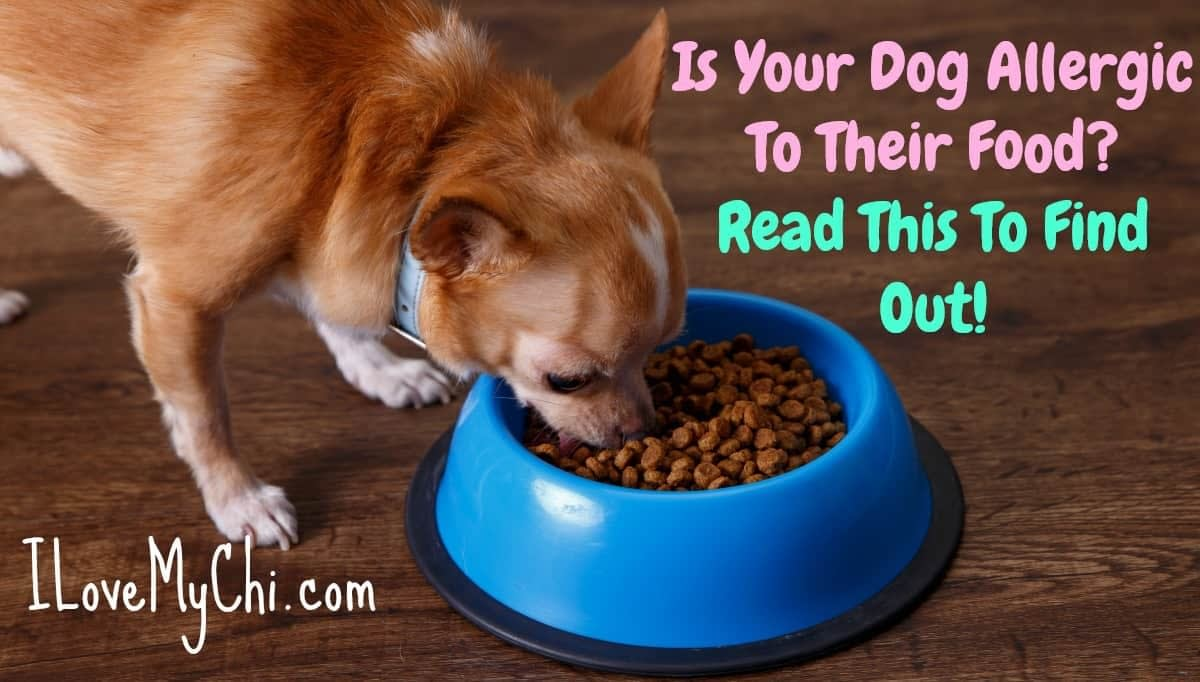 Is Your Dog Allergic to food