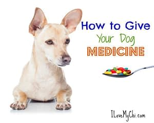 how to give your dog medicine