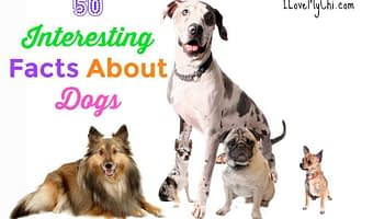 50 Interesting Facts About Dogs