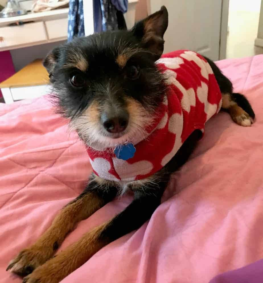 Lucas in red bone sweater on bed