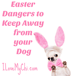 Easter Dangers to Keep Away from your Dog
