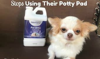 What To Do If Your Dog Stops Using Their Potty Pad