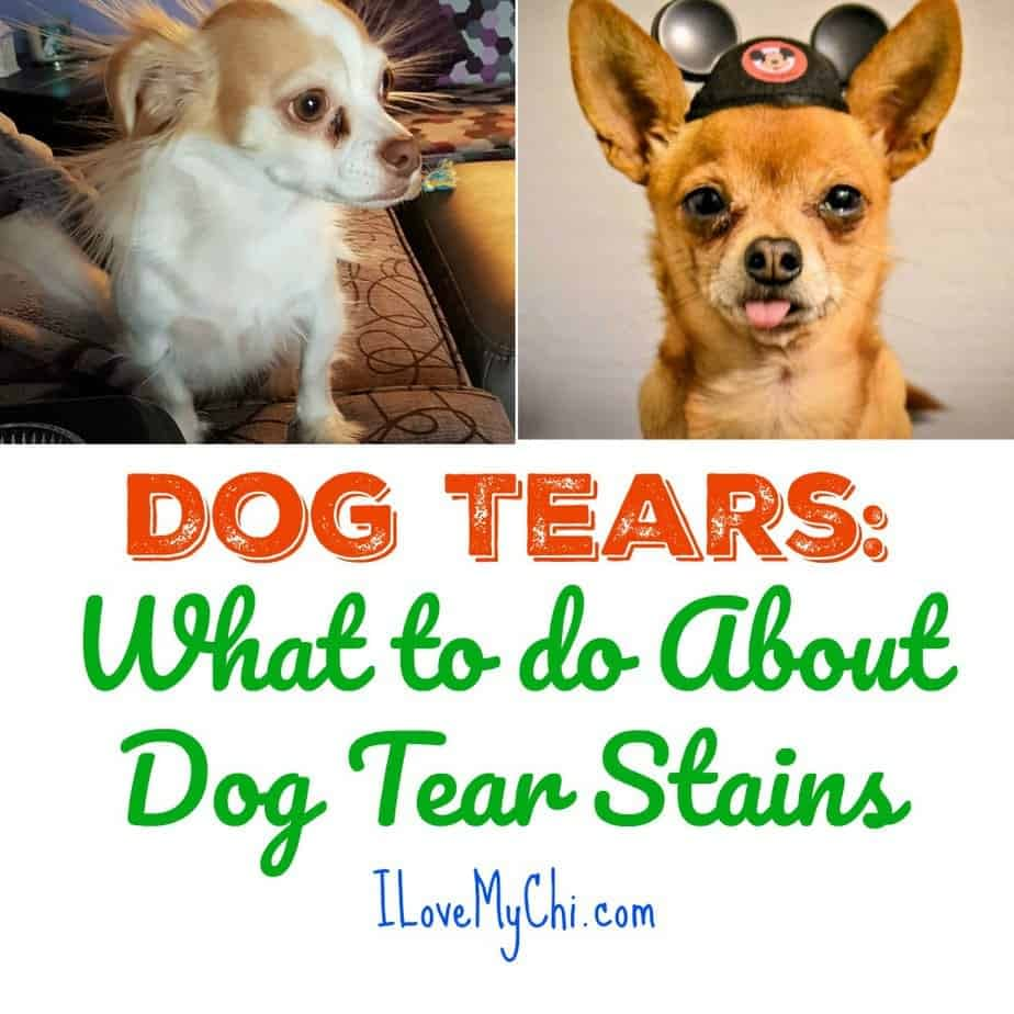 Dog Tears: What to do About Dog Tear Stains