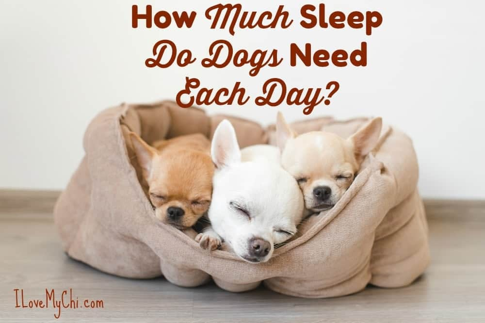 How Much Sleep Do Dogs Need Each Day