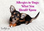 Allergies in Dogs: What You Should Know