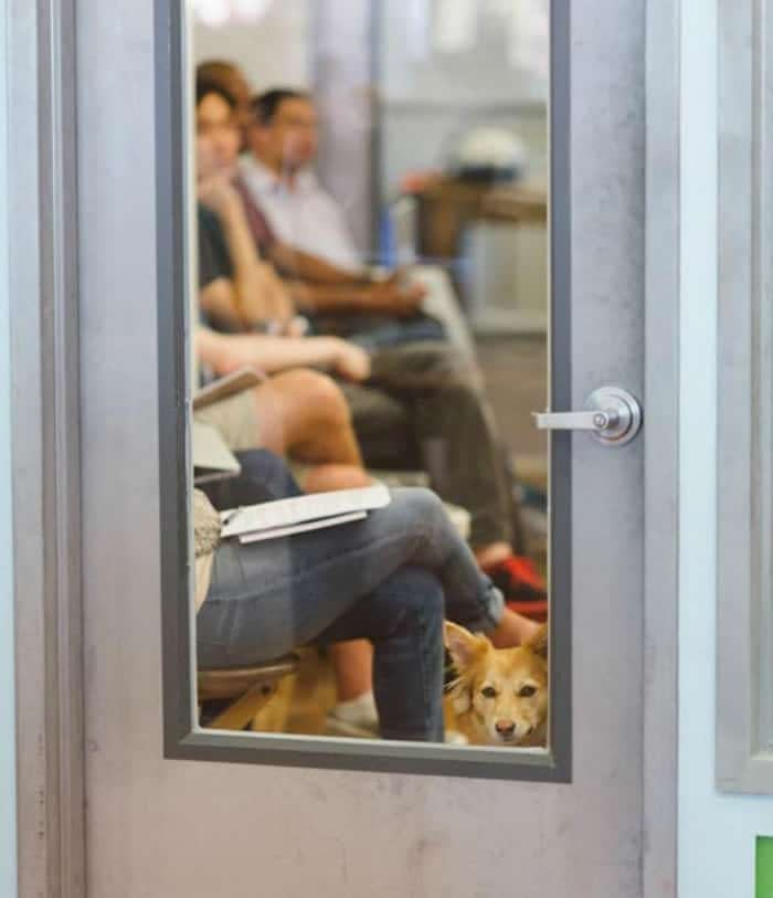 Etsy pet friendly office