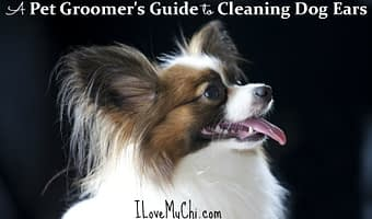 how to clean dog ears