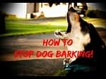 How To Stop Your Dog From Barking Video