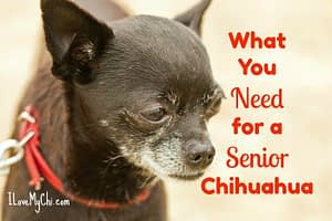 supplies for senior chihuahua