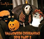 Halloween Chihuahuas 2018 Part 2
