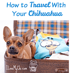 How to Travel With Your Chihuahua