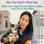 Take Your Dog To Work Day: What You Need To Know Before Taking Your Chi To The Office