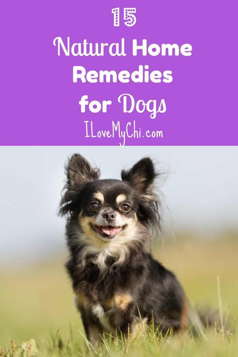 natural dog home rememdies