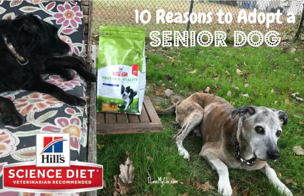 10 Reasons to Adopt a Senior Dog