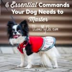 6 Essential Commands Your Dog Needs to Master
