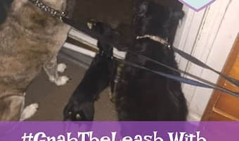 #GrabtheLeash with therabis dog supplemnts