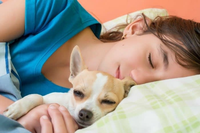 young woman and chihuahua sleeping in bed