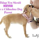 21 Things You Should NEVER Say to a Chihuahua Dog Parent