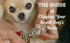 The Guide to Clipping Your Small Dog's Nails