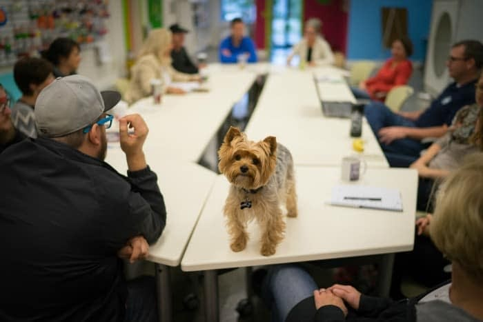 Planet Dog pet friendly office