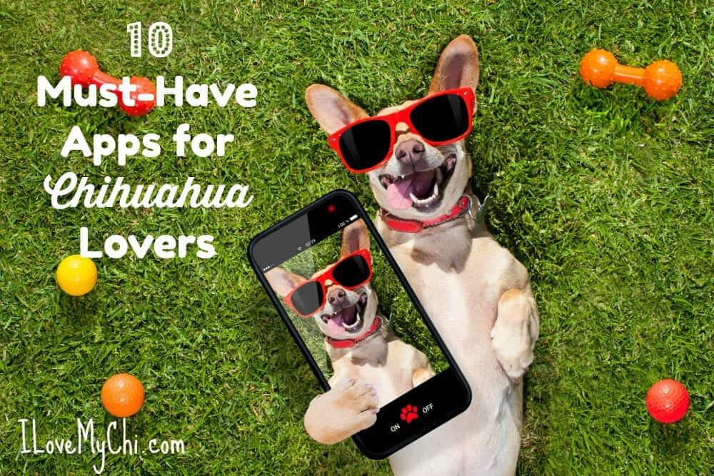 10 Must-Have Apps for Chihuahua Lovers