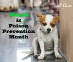 Prevent Your Dog From Being Poisoned