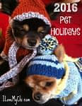 Pet Holidays for 2016