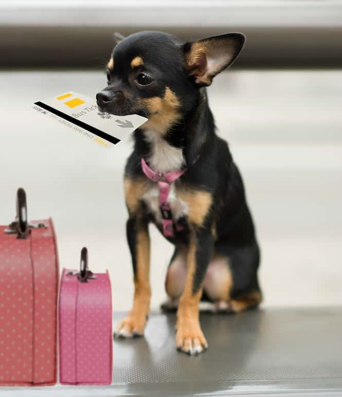 Common Mistakes When Traveling With Your Dog