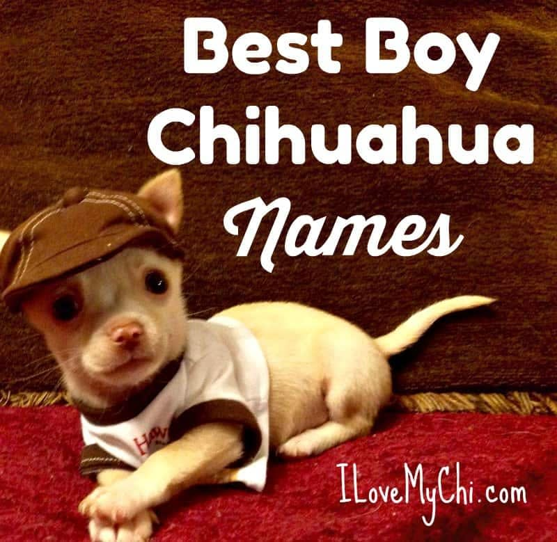 Best Boy Chihuahua Names