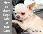 How to Save Dogs Left in Hot Cars